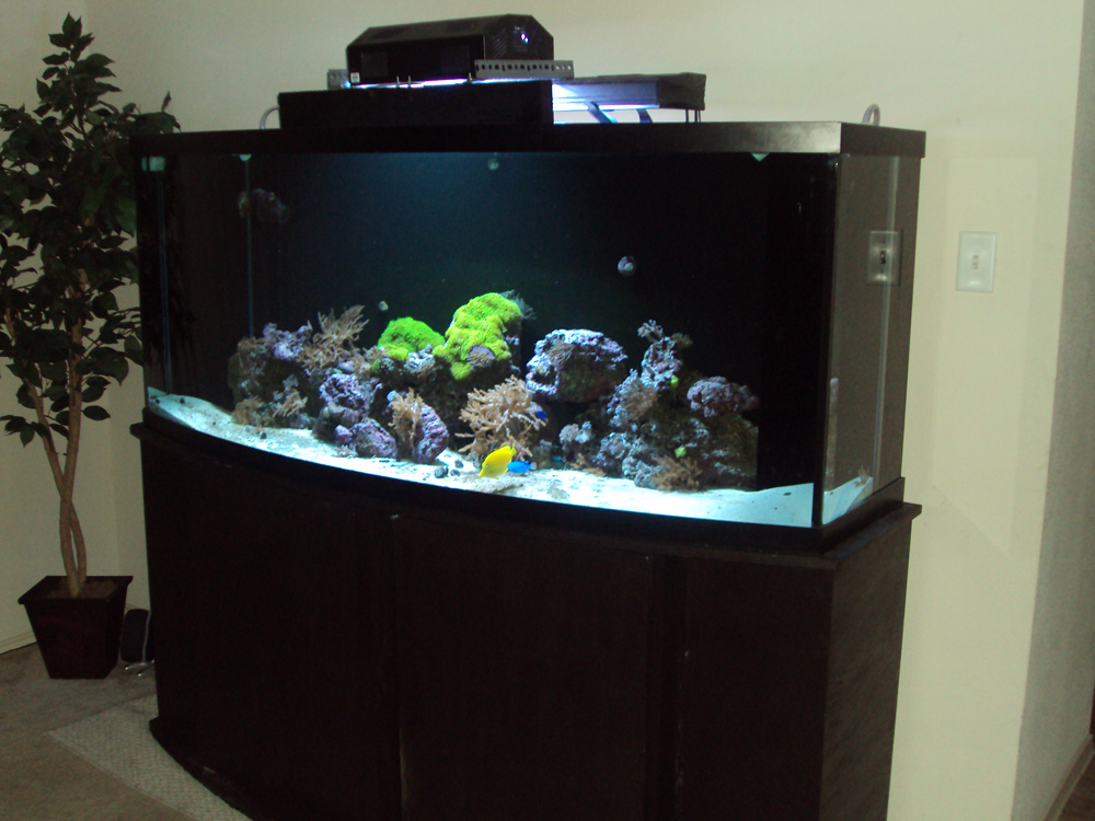 75 Gallon Bow Front Aquarium http://www.mattrauch.com/175-gallon-aquarium.php
