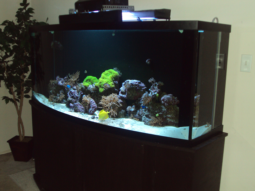 175 Gallon Aquarium